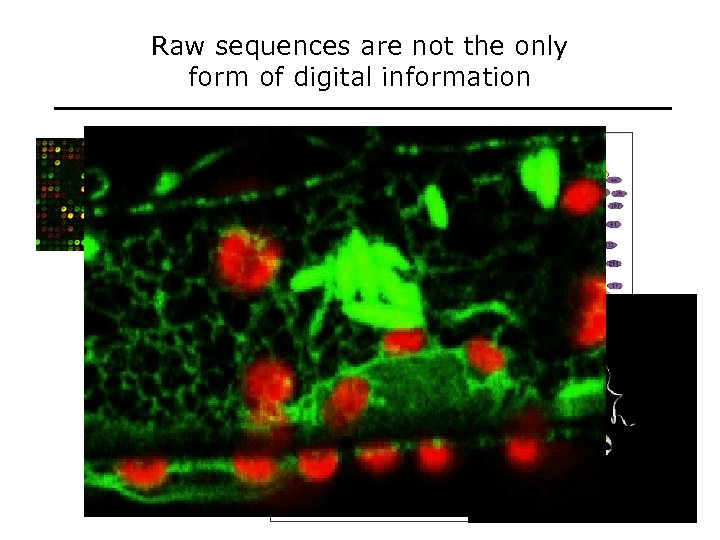 Raw sequences are not the only form of digital information