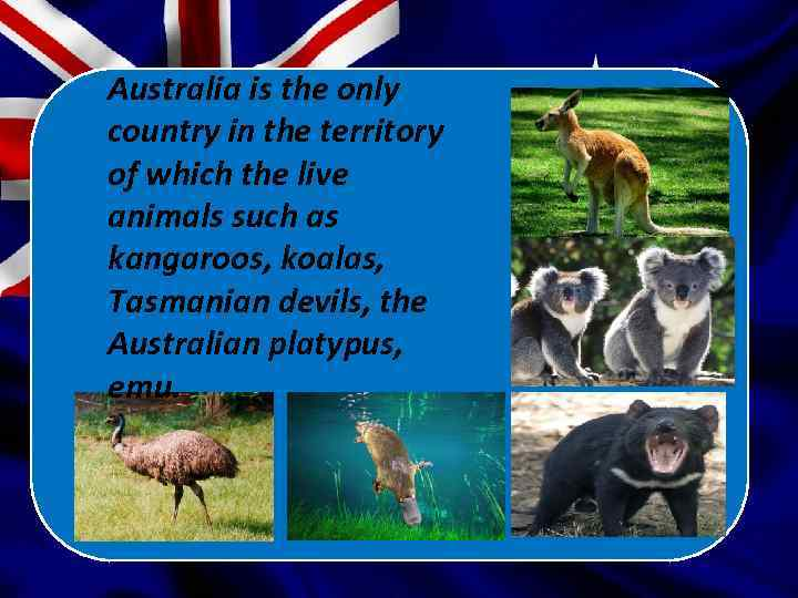 Australia is the only country in the territory of which the live animals such