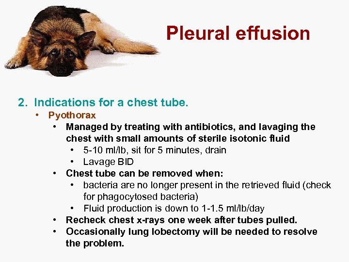 Pleural effusion 2. Indications for a chest tube. • Pyothorax • Managed by treating