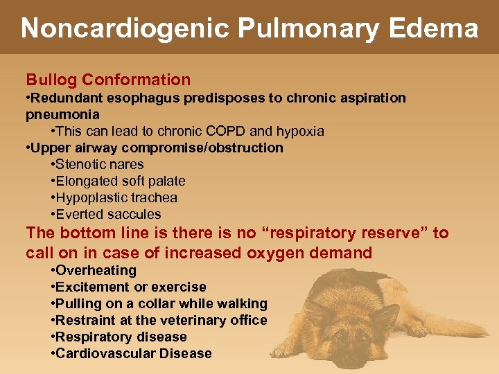 Noncardiogenic Pulmonary Edema Bullog Conformation • Redundant esophagus predisposes to chronic aspiration pneumonia •