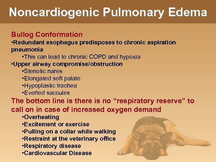 Noncardiogenic Pulmonary Edema Bullog Conformation • Redundant esophagus predisposes to chronic aspiration pneumonia •