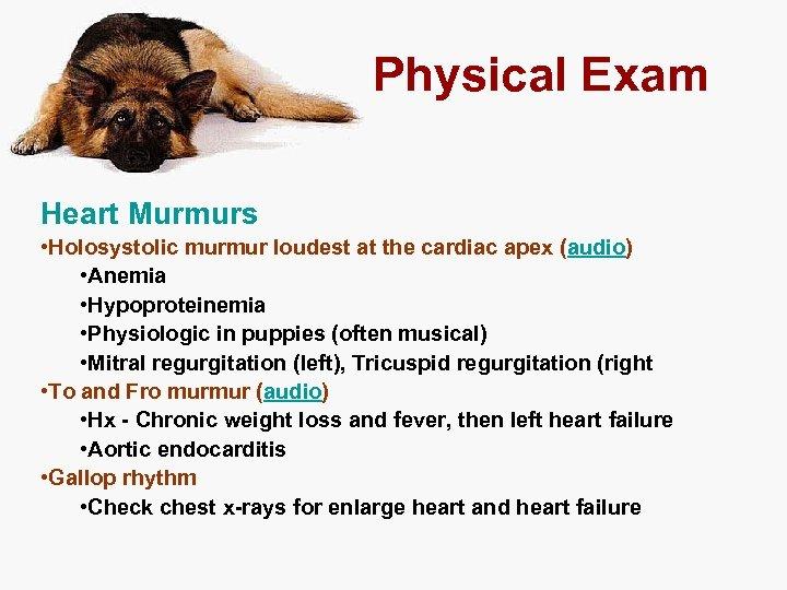 Physical Exam Heart Murmurs • Holosystolic murmur loudest at the cardiac apex (audio) •