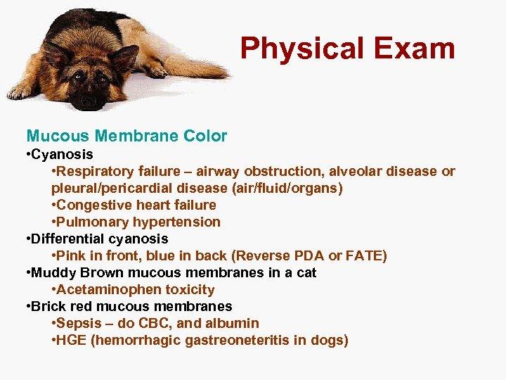 Physical Exam Mucous Membrane Color • Cyanosis • Respiratory failure – airway obstruction, alveolar