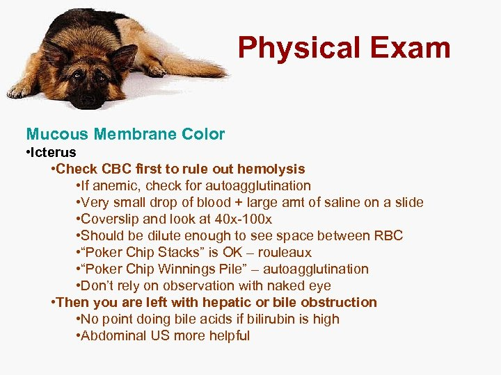 Physical Exam Mucous Membrane Color • Icterus • Check CBC first to rule out