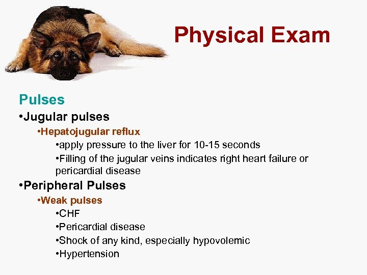 Physical Exam Pulses • Jugular pulses • Hepatojugular reflux • apply pressure to the
