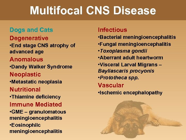 Multifocal CNS Disease Dogs and Cats Degenerative • End stage CNS atrophy of advanced