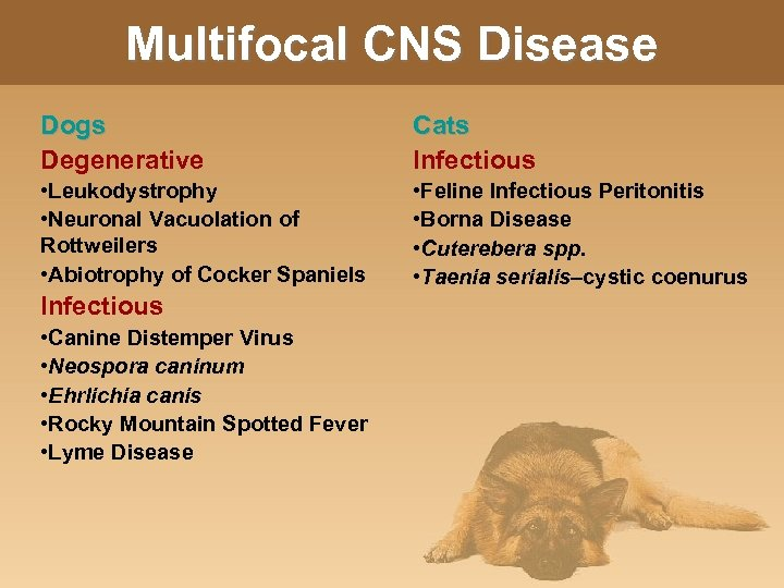 Multifocal CNS Disease Dogs Degenerative Cats Infectious • Leukodystrophy • Neuronal Vacuolation of Rottweilers