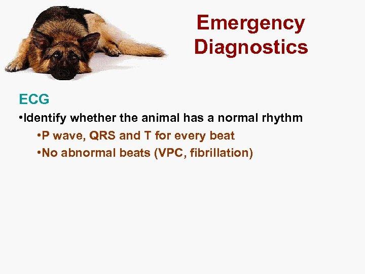 Emergency Diagnostics ECG • Identify whether the animal has a normal rhythm • P