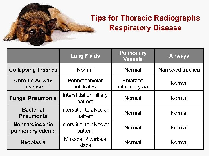 Tips for Thoracic Radiographs Respiratory Disease Lung Fields Pulmonary Vessels Airways Collapsing Trachea Normal