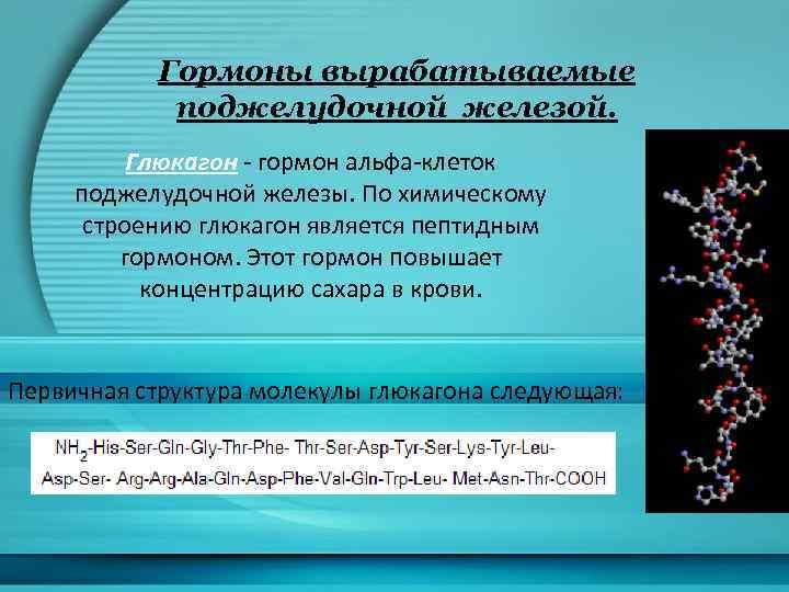 Гормоны вырабатываемые поджелудочной железой. Глюкагон - гормон альфа-клеток поджелудочной железы. По химическому строению глюкагон