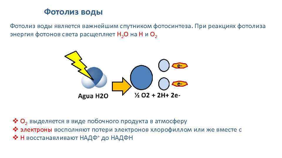 фотолиз воды продукты мастера веками