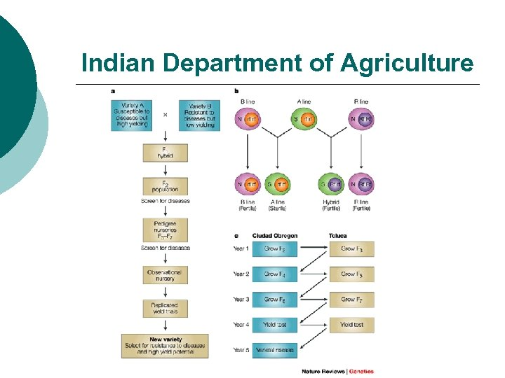 Indian Department of Agriculture
