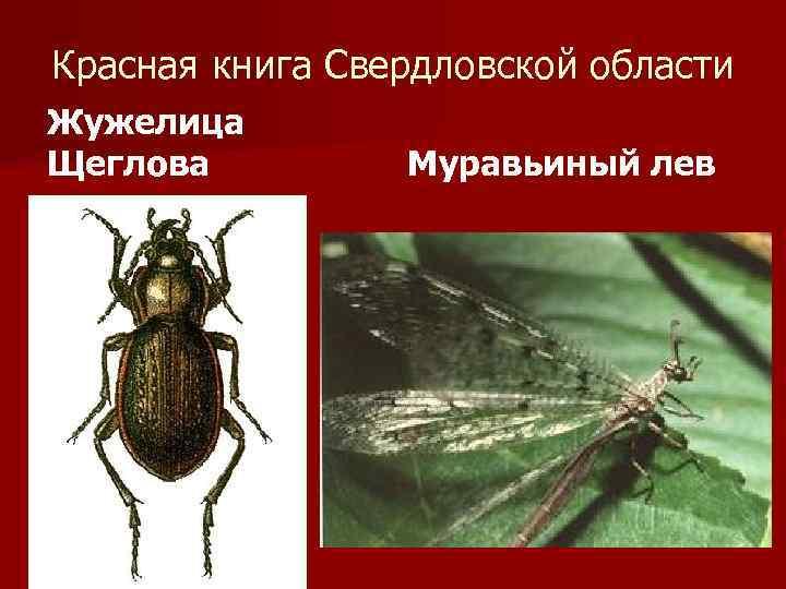 насекомые урала описание с картинками блок предохранителей