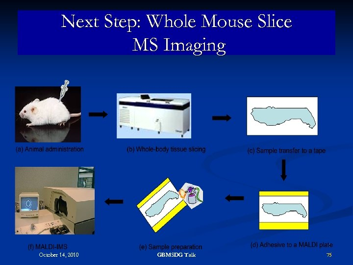 Next Step: Whole Mouse Slice MS Imaging October 14, 2010 GBMSDG Talk 75