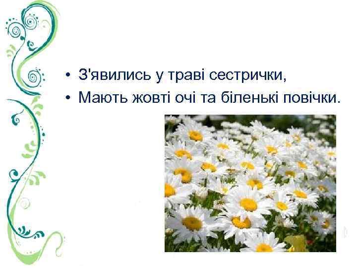 • З'явились у траві сестрички, • Мають жовті очі та біленькі повічки.