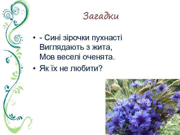 Загадки • Сині зірочки пухнасті Виглядають з жита, Мов веселі оченята. • Як їх