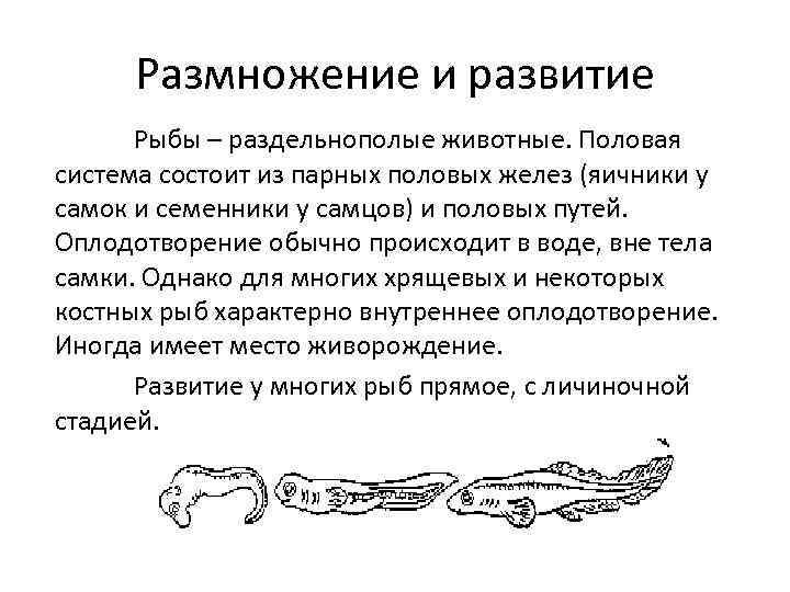 Размножение и развитие Рыбы – раздельнополые животные. Половая система состоит из парных половых желез
