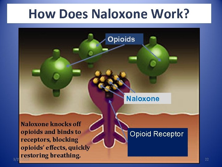 How Does Naloxone Work? Opioids Naloxone knocks off opioids and binds to receptors, blocking