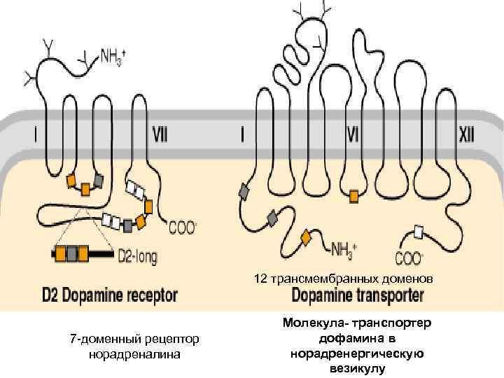 Транспортер дофамина конвейер скорость