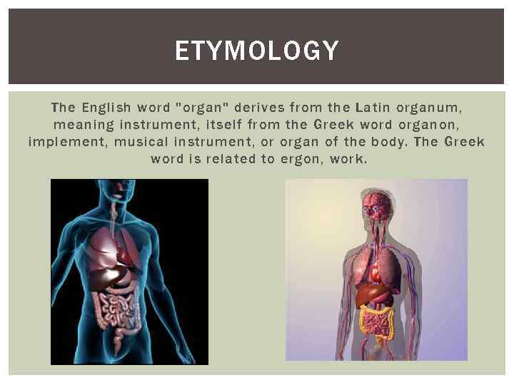 Organon greek word for organ the clear steroids