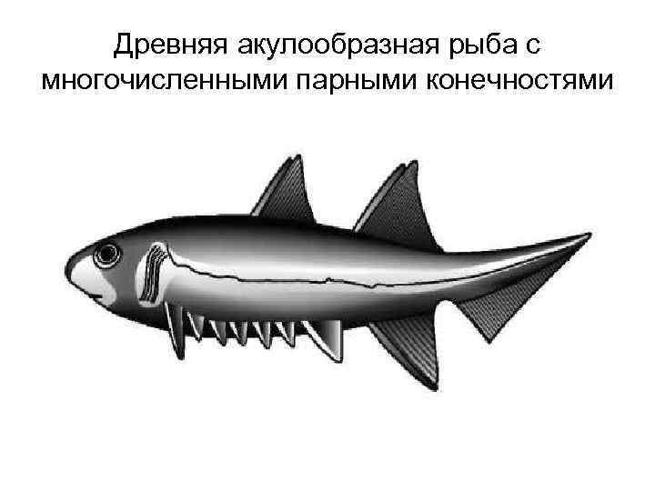 Древняя акулообразная рыба с многочисленными парными конечностями
