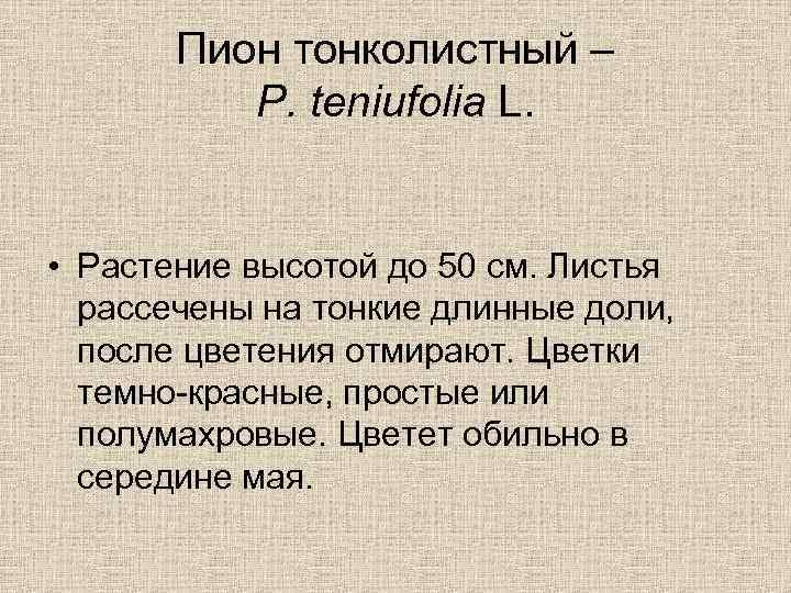 Пион тонколистный – P. teniufolia L. • Растение высотой до 50 см. Листья рассечены