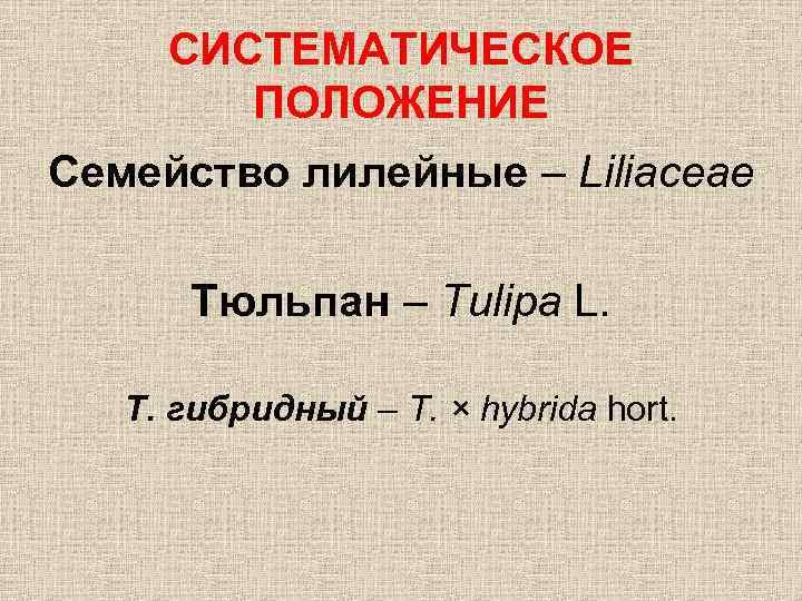 СИСТЕМАТИЧЕСКОЕ ПОЛОЖЕНИЕ Семейство лилейные – Liliaceae Тюльпан – Tulipa L. Т. гибридный – T.