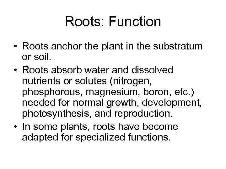 Roots: Function • Roots anchor the plant in the substratum or soil. • Roots