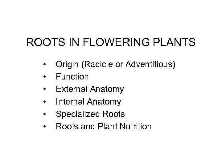 ROOTS IN FLOWERING PLANTS • • • Origin (Radicle or Adventitious) Function External Anatomy