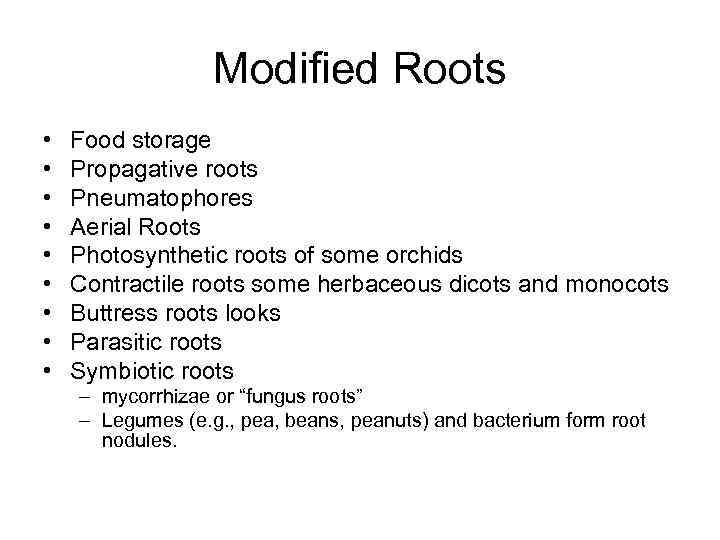 Modified Roots • • • Food storage Propagative roots Pneumatophores Aerial Roots Photosynthetic roots