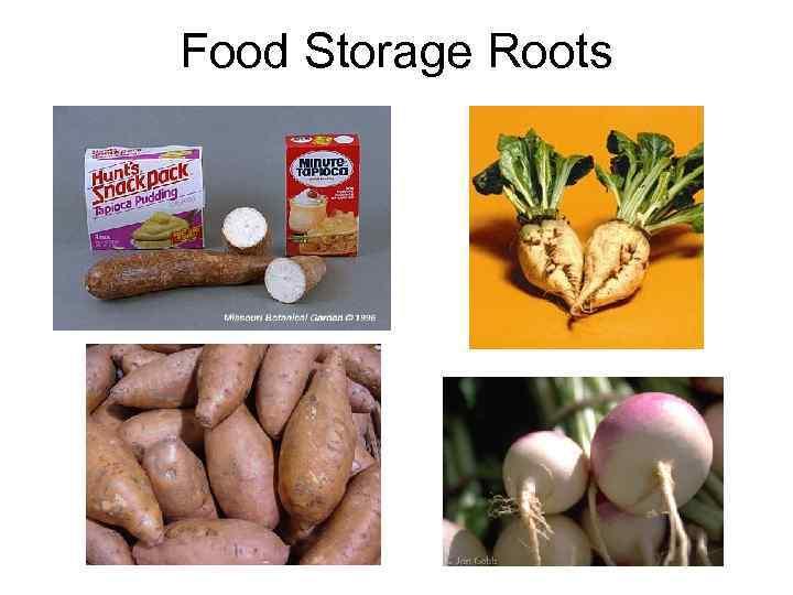 Food Storage Roots