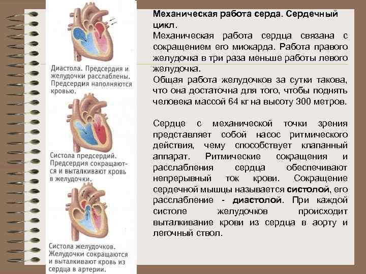 Механическая работа серда. Сердечный цикл. Механическая работа сердца связана с сокращением его миокарда. Работа