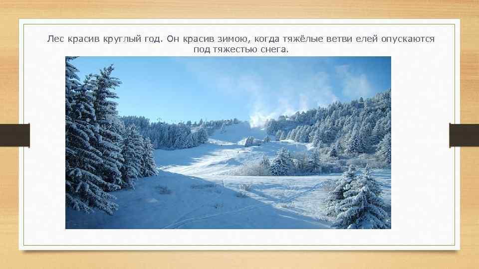 Лес красив круглый год. Он красив зимою, когда тяжёлые ветви елей опускаются под тяжестью