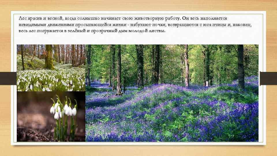 Лес красив и весной, когда солнышко начинает свою животворную работу. Он весь наполняется невидимыми