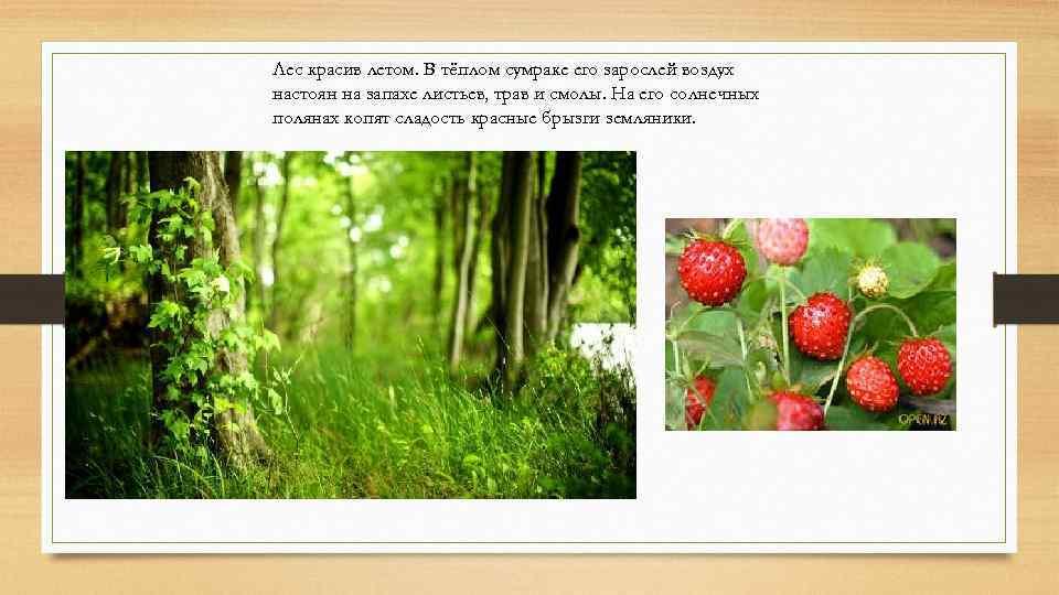 Лес красив летом. В тёплом сумраке его зарослей воздух настоян на запахе листьев, трав