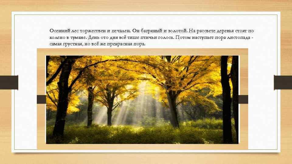 Осенний лес торжествен и печален. Он багряный и золотой. На рассвете деревья стоят по