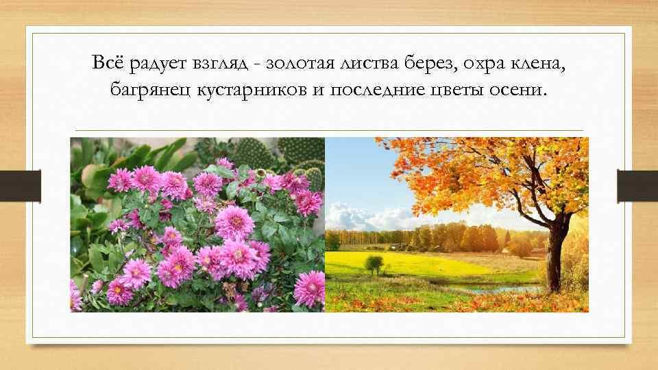 Всё радует взгляд - золотая листва берез, охра клена, багрянец кустарников и последние цветы
