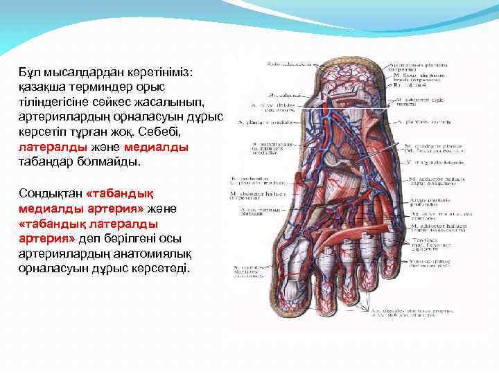 Бұл мысалдардан көретініміз: қазақша терминдер орыс тіліндегісіне сәйкес жасалынып, артериялардың орналасуын дұрыс көрсетіп тұрған