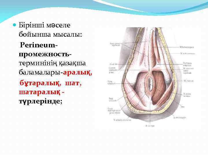 Бірінші мәселе бойынша мысалы: Рerineumпромежностьтерминінің қазақша баламалары-аралық, бұтаралық, шатаралық түрлерінде;
