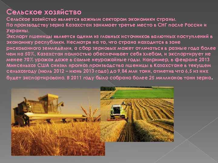 Сельское хозяйство является важным сектором экономики страны. По производству зерна Казахстан занимает третье место