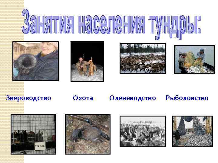 Звероводство Охота Оленеводство Рыболовство