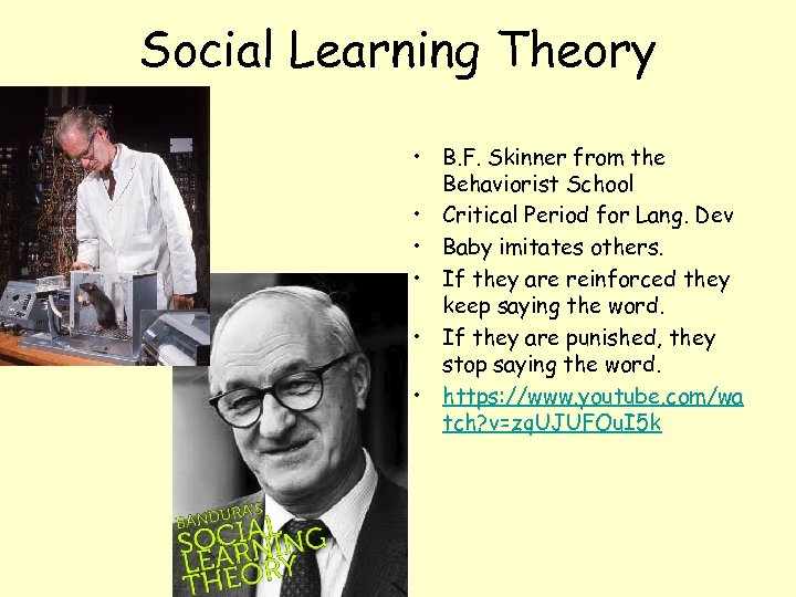 Social Learning Theory • B. F. Skinner from the Behaviorist School • Critical Period
