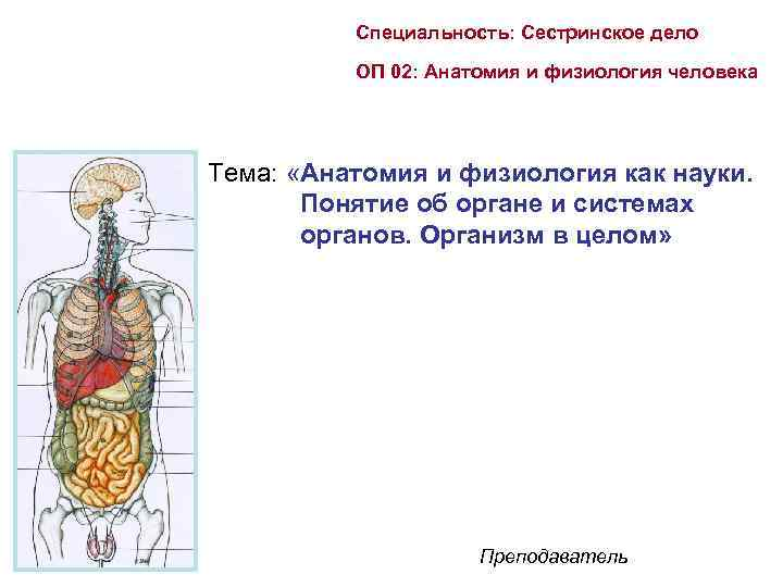 Специальность: Сестринское дело ОП 02: Анатомия и физиология человека Тема: «Анатомия и физиология как