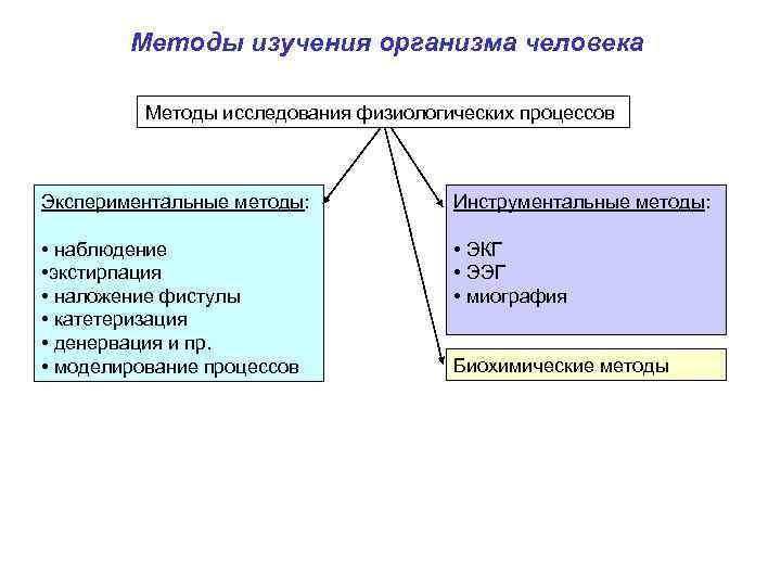 Методы изучения организма человека Методы исследования физиологических процессов Экспериментальные методы: Инструментальные методы: • наблюдение