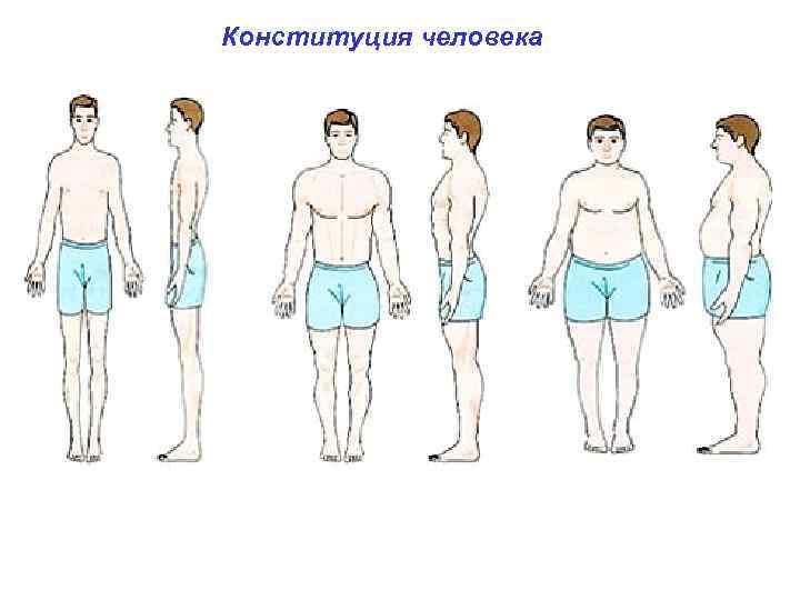 Конституция человека типы телосложения человека: долихоморфный ( от греч. dolicho характерны узкое и длинное