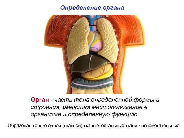 Определение органа Орган - часть тела определенной формы и строения, имеющая местоположение в организме