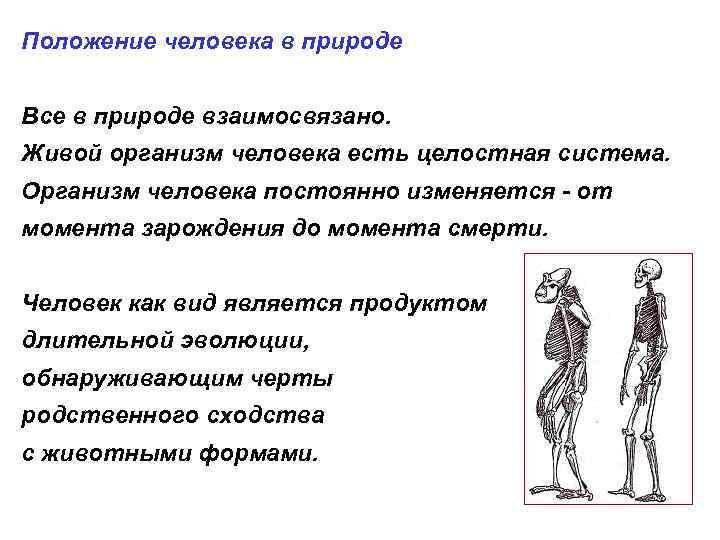 Положение человека в природе Все в природе взаимосвязано. Живой организм человека есть целостная система.