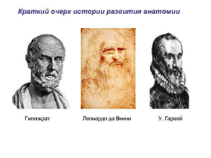 Краткий очерк истории развития анатомии Гиппократ Леонардо да Винчи У. Гарвей