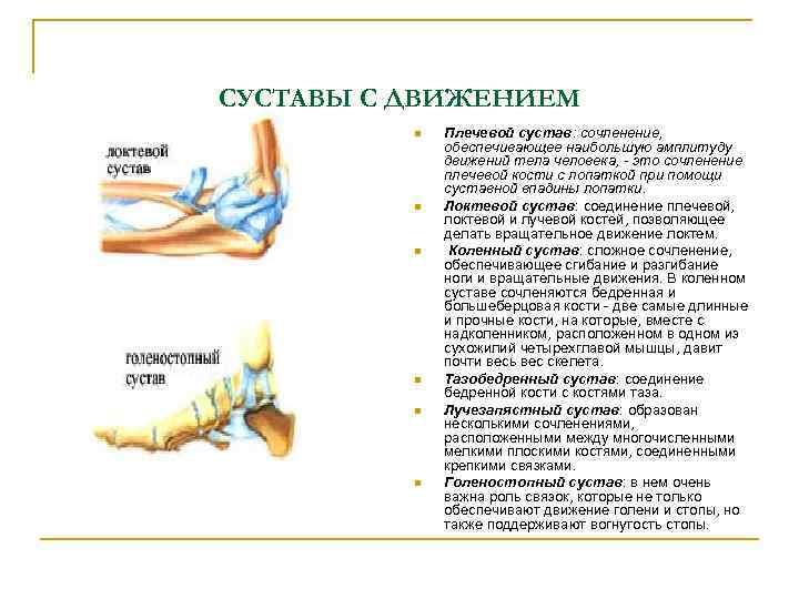 СУСТАВЫ С ДВИЖЕНИЕМ n n n Плечевой сустав: сочленение, обеспечивающее наибольшую амплитуду движений тела