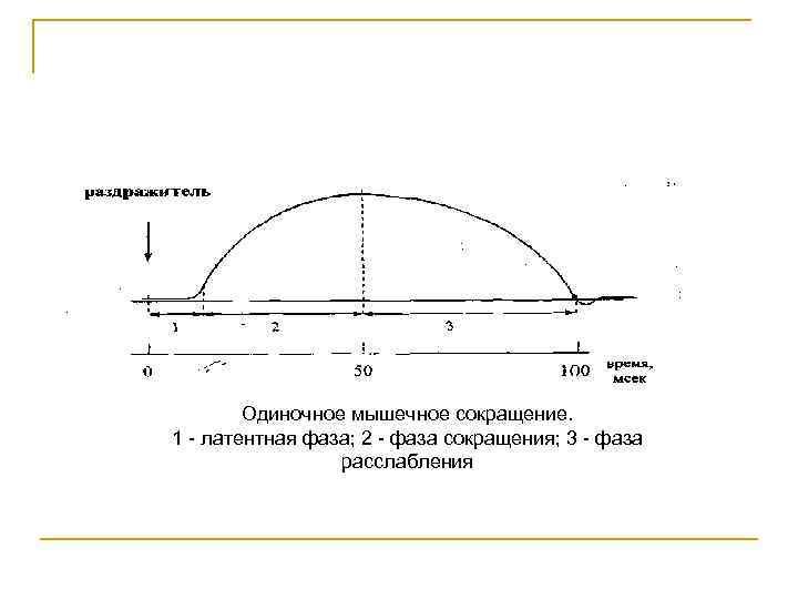 Одиночное мышечное сокращение. 1 латентная фаза; 2 фаза сокращения; 3 фаза расслабления